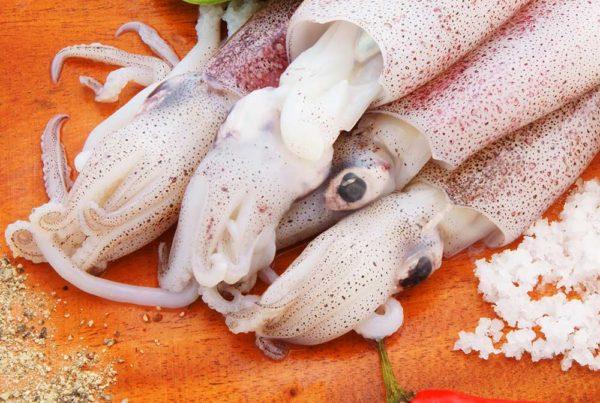 mare-azzurro-categoria-prodotto-ittico-calamari