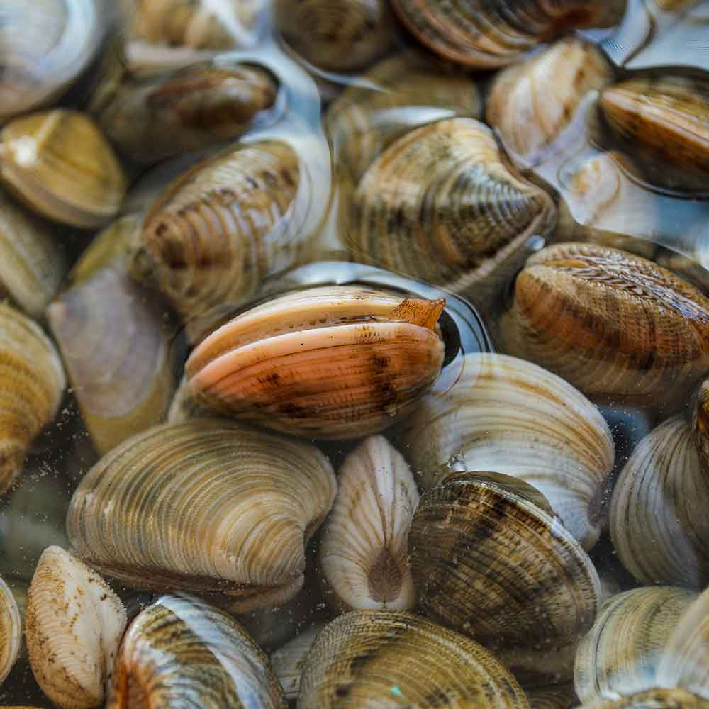 mare-azzurro-categoria-prodotto-ittico-molluschi